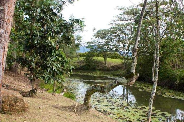Foto 8 de Lote en La Ceja, Antioquia