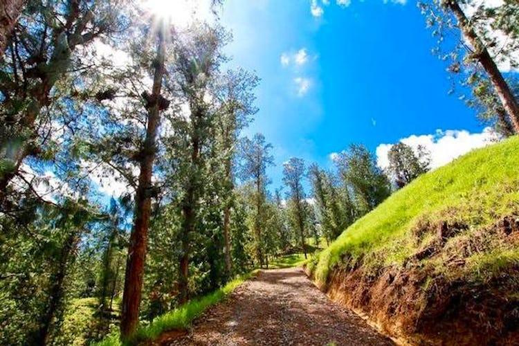 Portada Bosques de Luisines 2 (El Retiro)