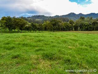 Una vista de un campo herboso con árboles en el fondo en -