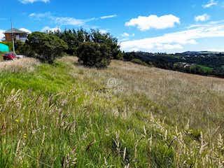 Una vista de un campo herboso con árboles en el fondo en Horizontes