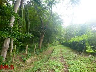 Un frondoso bosque verde con muchos árboles en Tierra del Sol Naciente