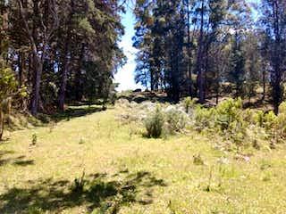 Una vista de un bosque con árboles y arbustos en Lote En Venta En Retiro Fizebat