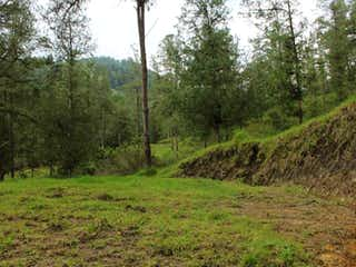 Una vista de un bosque con árboles en el fondo en Lote En Venta En Retiro La Fe
