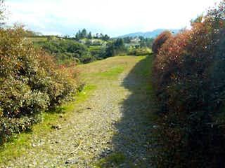 Un camino que tiene algo de hierba y árboles en Lote En Venta En Envigado Alto De Las Palmas