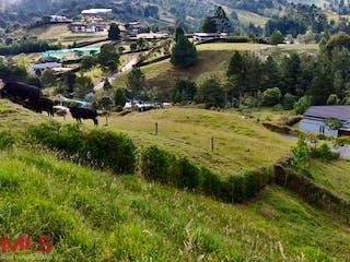 Un rebaño de ovejas de pie en la cima de una exuberante ladera verde en Reserva del Retiro
