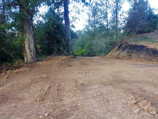 Un camino de tierra en medio de un bosque en ENTRE BOSQUES LA LUZ