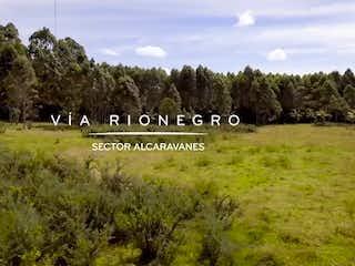 Un rebaño de animales parados encima de un exuberante campo verde en Maseta Lotes