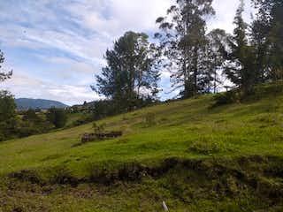 Una exuberante ladera verde cubierta de hierba y árboles en Alcala