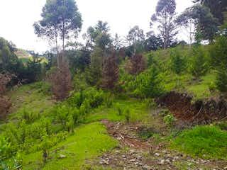 Un frondoso bosque verde con muchos árboles en Alcala