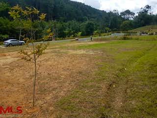 Un campo herboso con un montón de animales en él en El Herbal