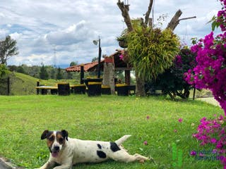 Un perro blanco y negro sentado en un campo de flores en Casa-Finca ParaVenta,