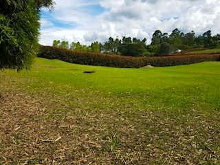 Un campo herboso con un montón de animales en él en LA ESTANCIA