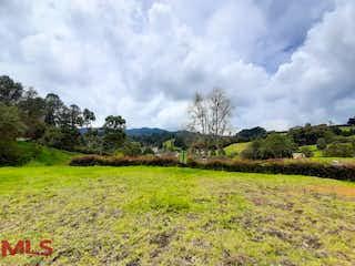 Una vista de un campo herboso con árboles en el fondo en Parcelacion las Palmas