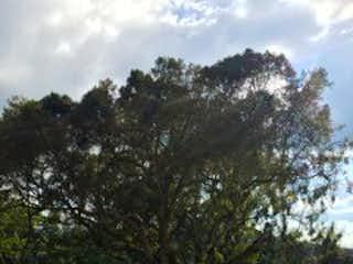 Una vista de una zona boscosa con árboles en el fondo en Lote en Venta ALTO DE PALMAS