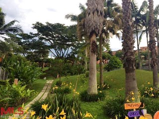 Un árbol en medio de un parque en Rocio De La Mañana