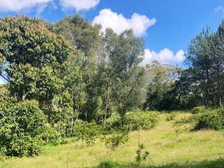 Una imagen de un campo con árboles en el fondo en Vendo Lote 12.400 mts Pontezuela