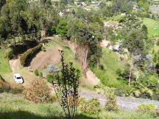 Un par de animales que están de pie en la hierba en 96081 - Vendo finca con 2 casas,en producción de aguacates en Guarne Antioquia