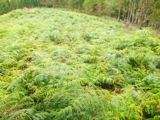 Cerca de un frondoso bosque verde en 98659 - Venta lote  Don Diego la ceja  , Antioquia, Retiro