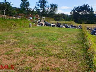 Un rebaño de ganado parado en una exuberante ladera verde en Entreverdes