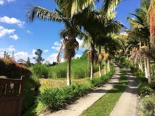 Una fila de palmeras delante de palmeras en Finca en Venta CARMEN DE VIBORAL