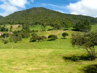Un rebaño de animales pastando en una exuberante ladera verde en Lote En Venta En La Calera Vereda Marquez.