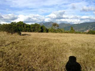 Un par de pájaros sentados en un campo en Conjunto La Albania