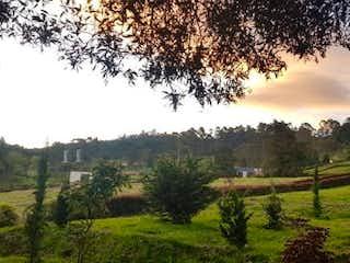Una vista de un bosque con un árbol en el fondo en Las Palmas, Lote en venta en Alto De Las Palmas Indiana de 2125m²