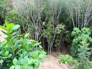 Una planta verde está creciendo en un jardín en Vendo Lote 2700 mts Santa Fe de Ant al lado del Gaitero