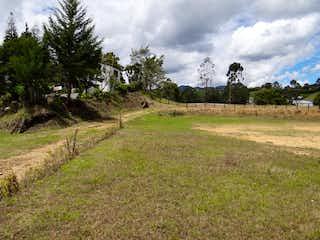 Una vista de un campo herboso con árboles en el fondo en Lote independiente pontezuela llanogrande 2 explanaciones