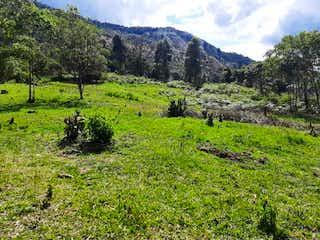 Un grupo de animales que están de pie en la hierba en VENTA LOTES EN REMATE NGRESO POR LA CATEDRAL DE ENVIGADO Y LA MIEL