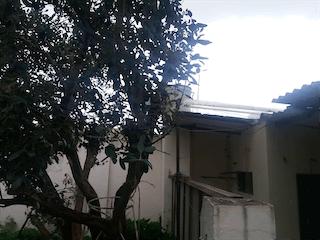 Un árbol delante de una casa con un árbol en Casa en Venta en Chía, Cundinamarca
