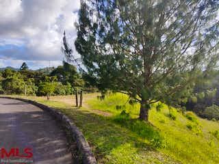 Una vista de un bosque con un árbol en el fondo en Reserva de Retiro