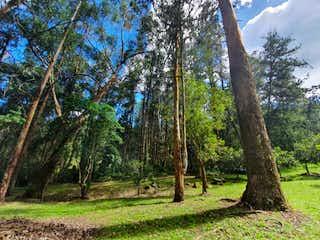Un árbol en el bosque con un árbol en Lote en venta en fizebad, el retiro