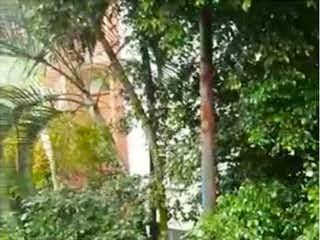Una imagen de un árbol en la hierba en Venta de 2 apartamentos en Envigado P.3 C.3643362