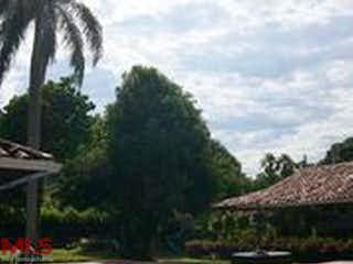 Guaymaral (El Tesoro)