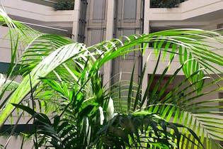 Departamento en Venta Lomas de Vista Hermosa, Cuajimalpa de Morelos, Garden House