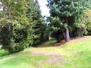 Una vista de un bosque con árboles en el fondo en Conjunto San Jorge