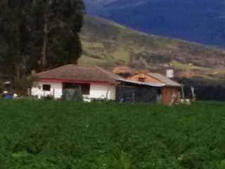 Un par de animales que están de pie en la hierba en Finca En  Guasca El Santuario - con una casa construida