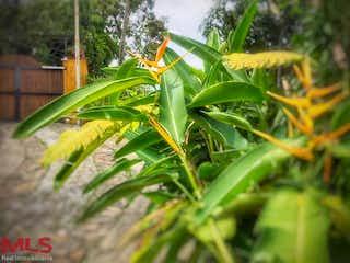 Un primer plano de una planta en un jardín en No aplica